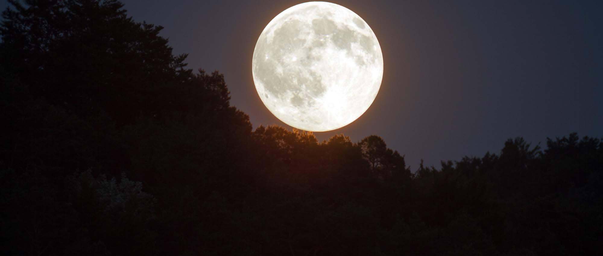 Full Moon in sky over forest