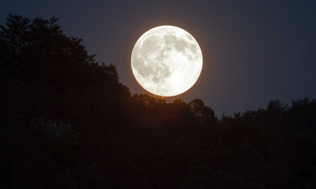 A full moon shining over tree tops